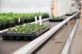 conveyoryoungplants-141.jpg