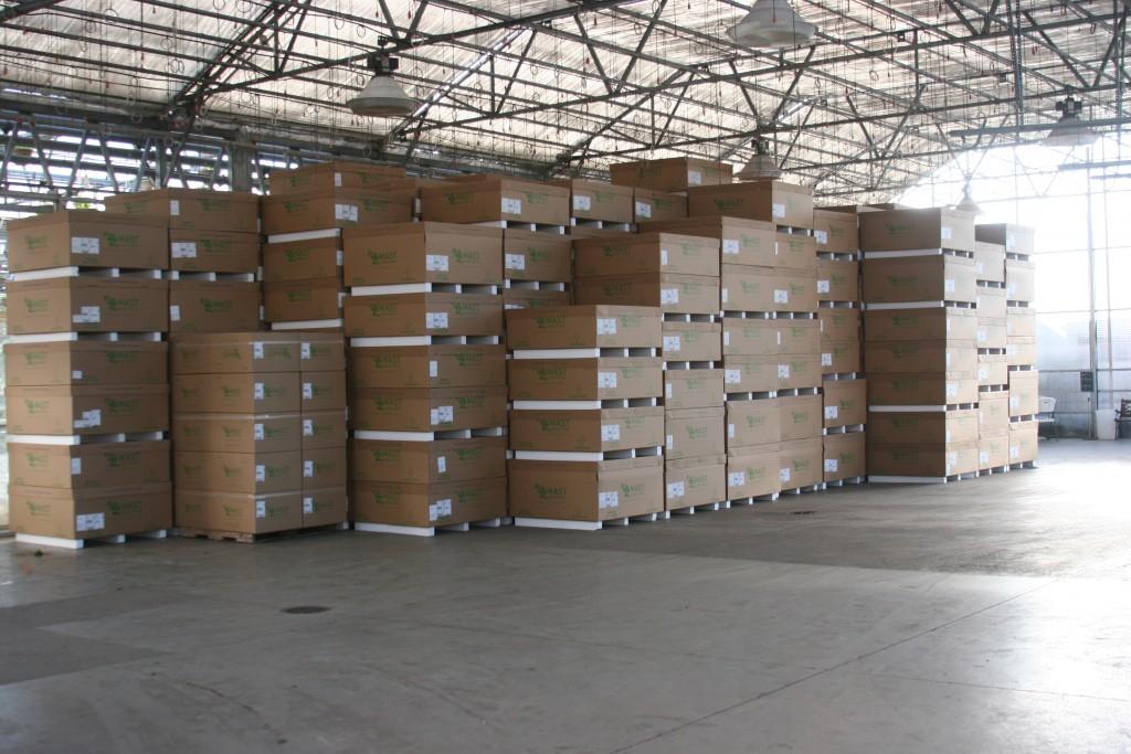 Shipping Fed Ex Master Cartons 2